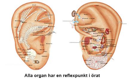 organ-sida